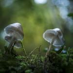 champignons_sandfra